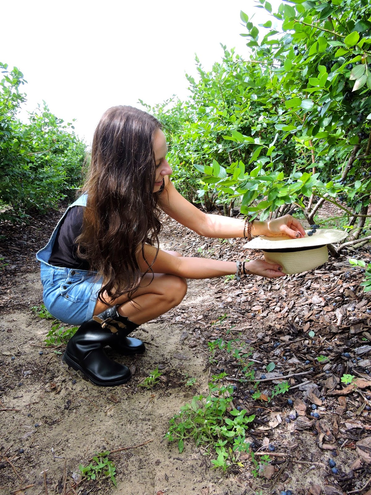 Blueberry Picking with The Closet Dime
