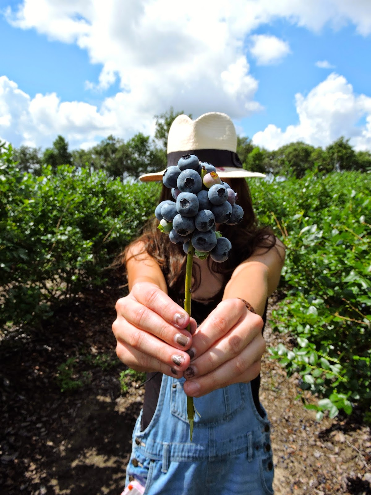 Blueberry Picking With Rachel Munson